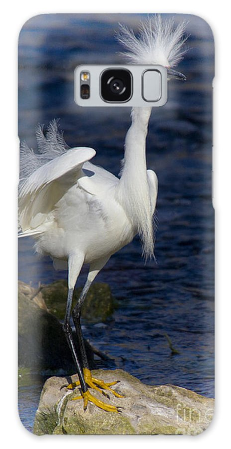 Snowy Egret Galaxy S8 Case featuring the photograph Standing Tall by Barbara Bowen