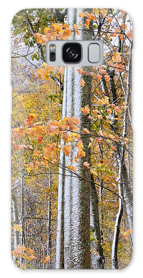 Winter Galaxy S8 Case featuring the photograph Standing Tall by Susan Leggett