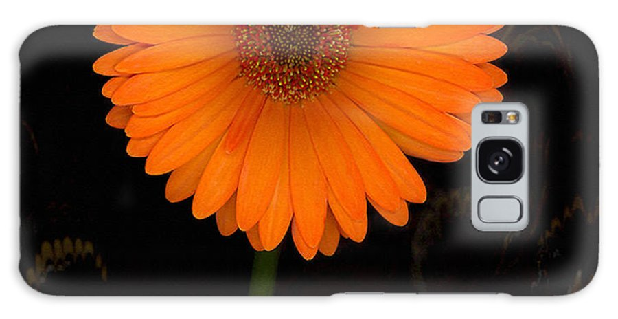 Gerbera Daisy Galaxy S8 Case featuring the photograph Standing Tall by Suzanne Gaff