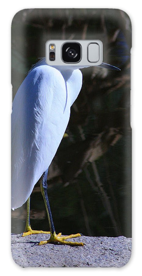 Snowy Egret Galaxy S8 Case featuring the photograph Stare Down by Richard Stephen