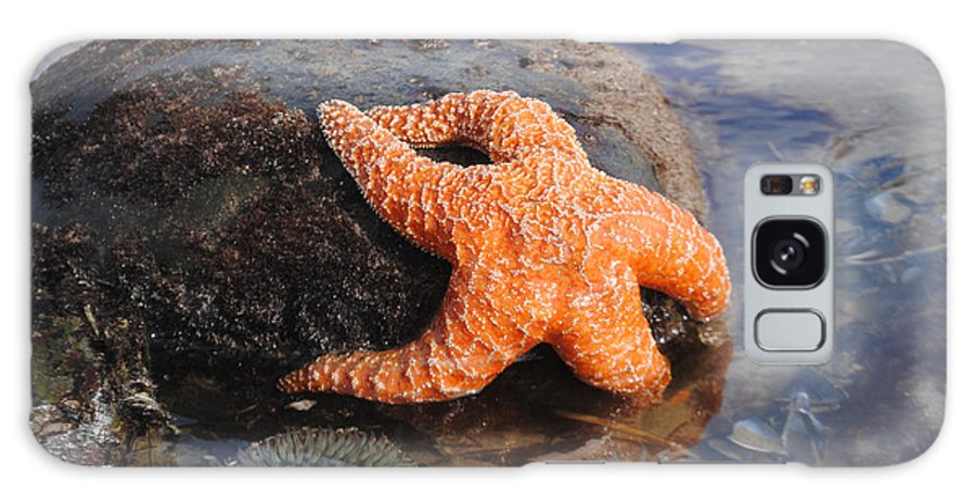 Gina Braget Galaxy S8 Case featuring the photograph Starfish 2011 by Gina Braget