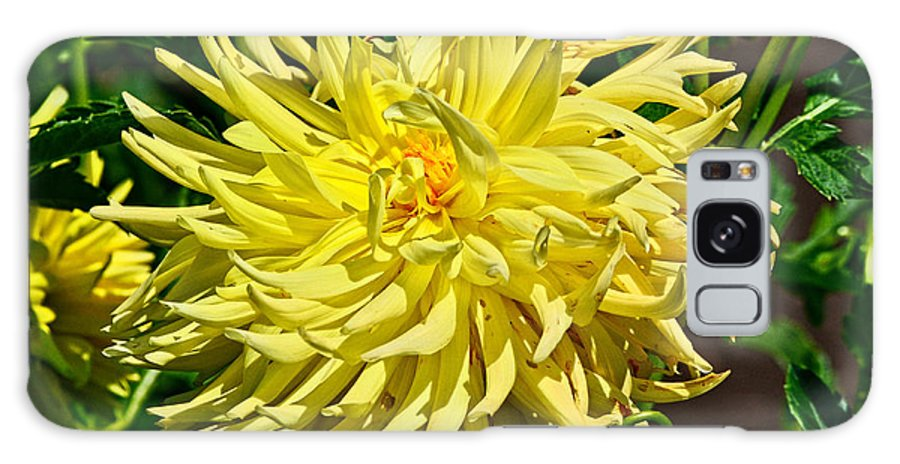 Starlite Dahlia Galaxy S8 Case featuring the photograph Starlite Dahlia by Thomas J Rhodes