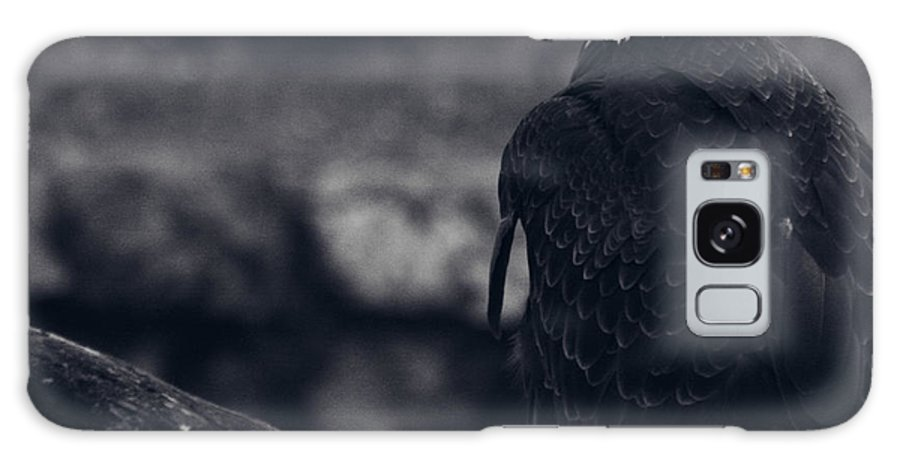 Bald Eagle Galaxy S8 Case featuring the photograph Stately by Kyle Walker