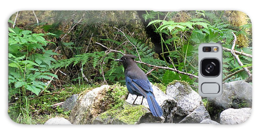 Phil Welsher Galaxy S8 Case featuring the photograph Stellars Jay Juneau Alaska by Phil Welsher