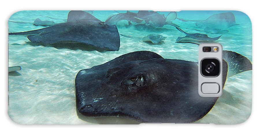 Stingray Galaxy S8 Case featuring the photograph Stingrays by Carey Chen