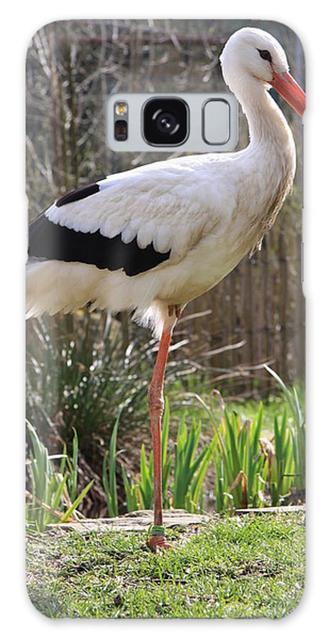 Stork Galaxy S8 Case featuring the photograph Stork by Christiane Schulze Art And Photography