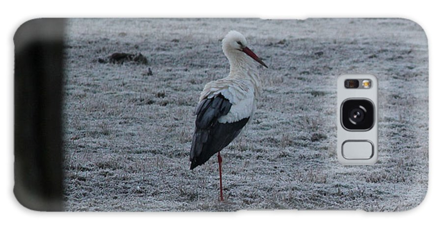 Stork Galaxy S8 Case featuring the photograph Stork On A Frosty Morning by Four Hands Art
