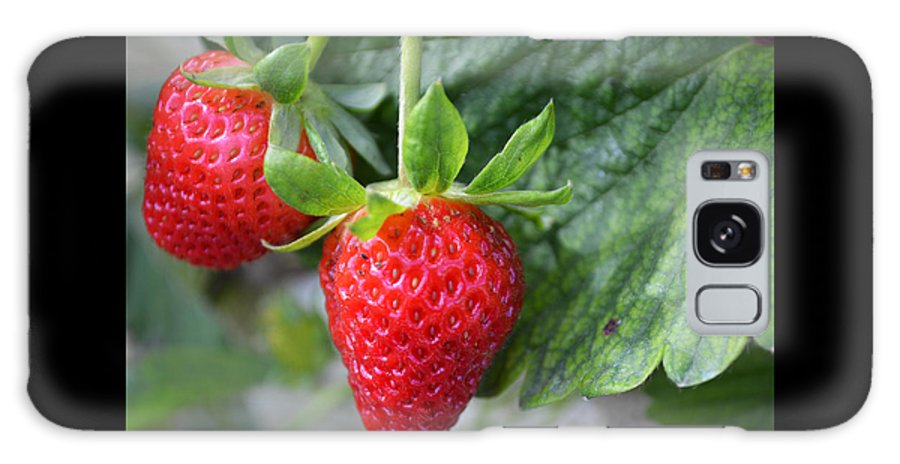 Fruit Galaxy S8 Case featuring the photograph Strawberries by GK Hebert Photography