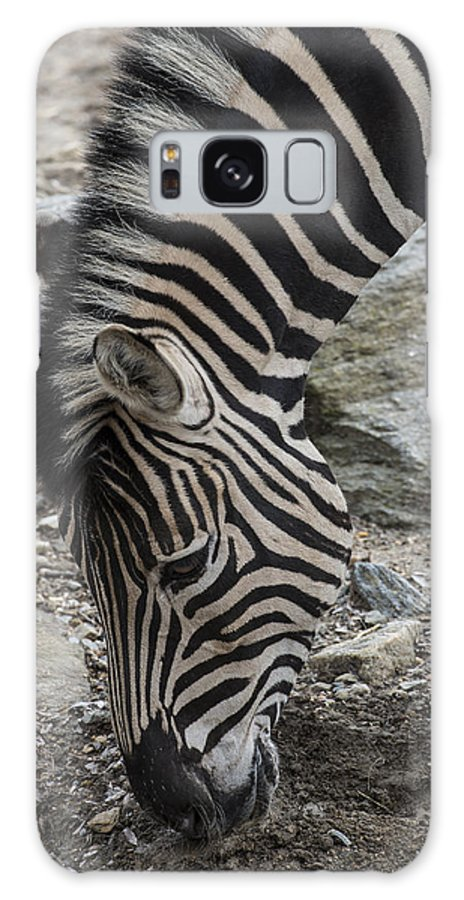 Zebra Galaxy S8 Case featuring the photograph Stripes by Phil Abrams