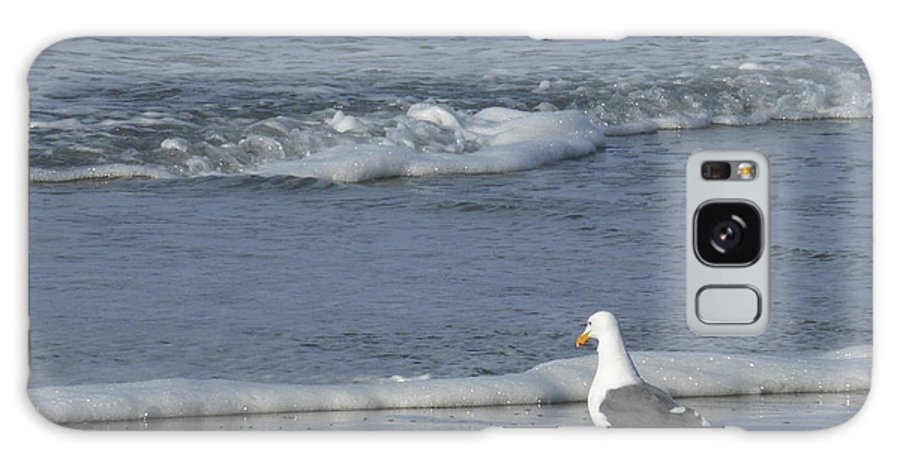 Seagull Galaxy S8 Case featuring the photograph Strutting Seagull by Amanda Roberts