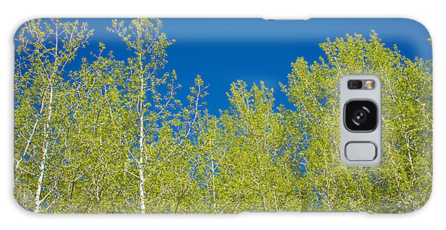 Wyoming Galaxy S8 Case featuring the photograph Summer Aspens by Kent Becker