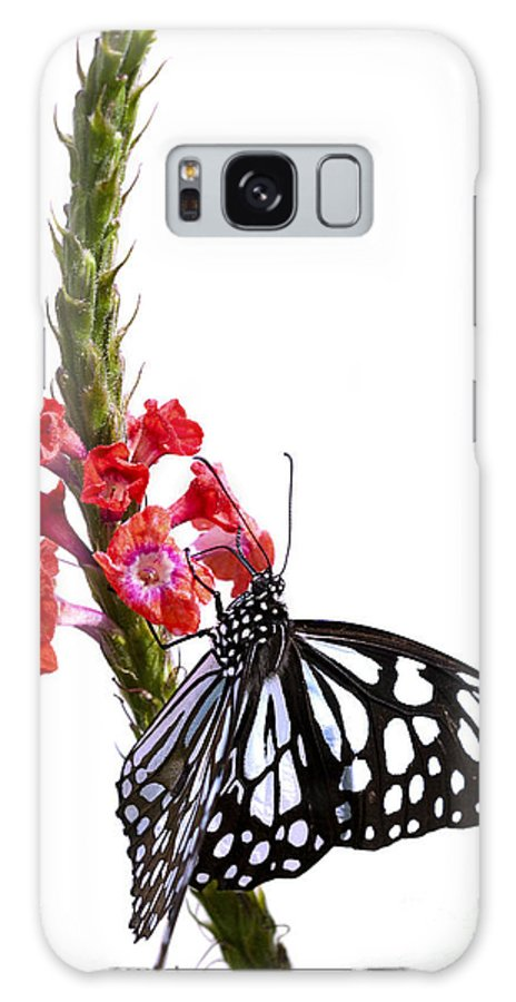 Butterfly Galaxy S8 Case featuring the photograph Delicate Beauty by Patty Colabuono