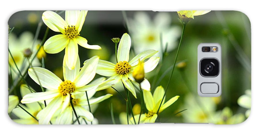 Dainty Galaxy S8 Case featuring the photograph Summer Flowers by Corinne Rhode