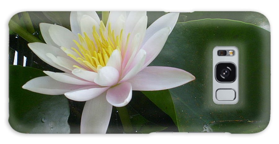 Water Lily Framed Print Galaxy S8 Case featuring the photograph Summer Fun by Ann Willmore