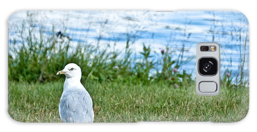 Seagull Galaxy S8 Case featuring the photograph Summer Sea Gull by Cheryl Baxter