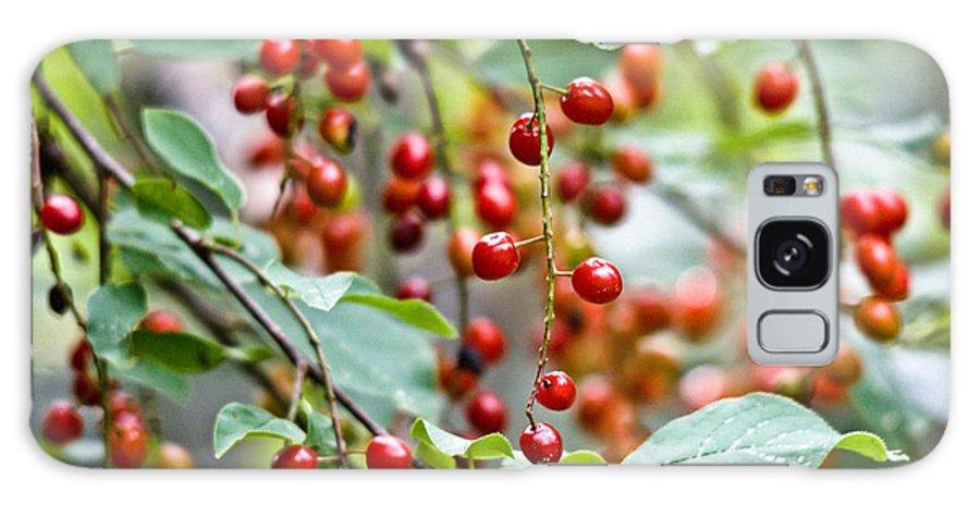 Chokecherries Galaxy S8 Case featuring the photograph Summer Wild Berries by Cheryl Baxter