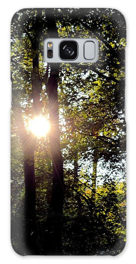 Sun Kissed Trees Galaxy S8 Case featuring the photograph Sun Kissed Trees by Maria Urso
