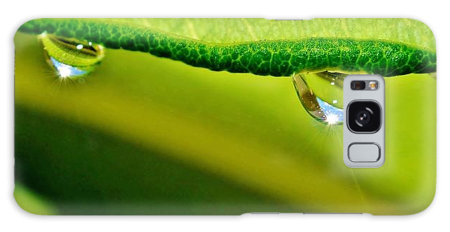 Raindrops; Plants; Leafs; Droplets; Water; Drops; Background; Close Up; Macro; Decorative; Decor; Detail; Garden; Nature; Reflection; Green; Yellow; Sunlight; Galaxy S8 Case featuring the photograph Sun Pierced by Werner Lehmann