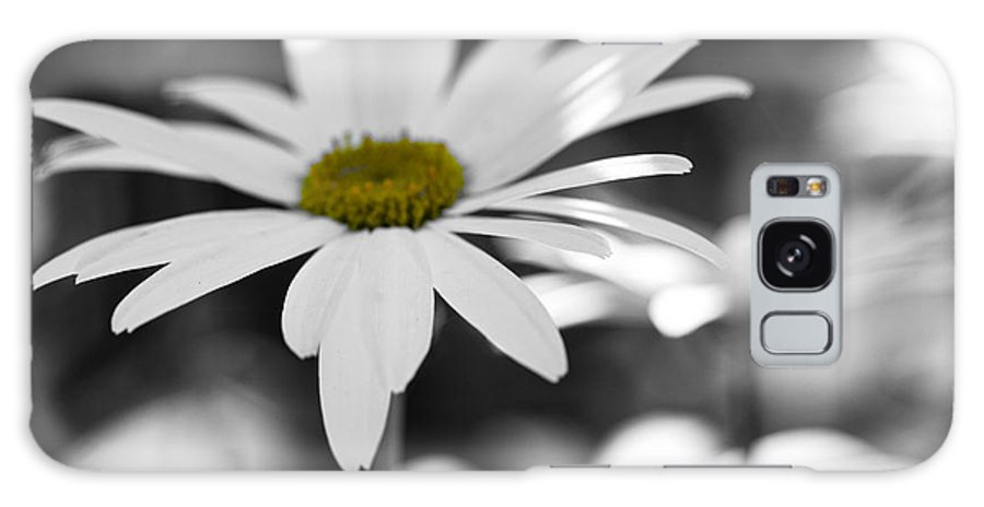 Daisy Galaxy S8 Case featuring the photograph Sun-speckled Daisy by Don Schwartz