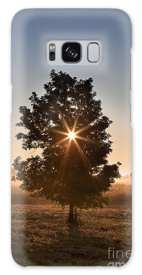 Tree Galaxy S8 Case featuring the photograph Sunday Morning by Brandon Alms