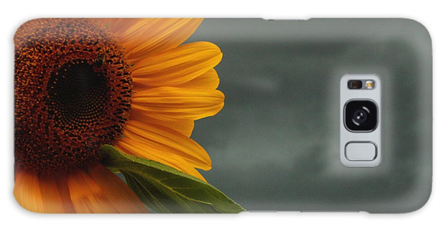 Sunflower Galaxy S8 Case featuring the photograph Sunflower And A Storm by Terri JS Molitor