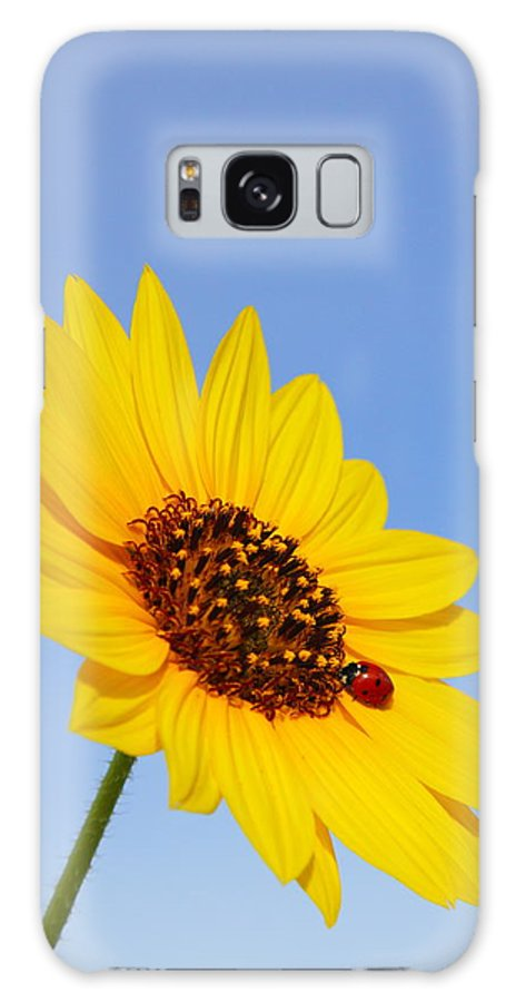 Sunflower Galaxy S8 Case featuring the photograph Sunflower And Ladybird Beetle 2am-110488 by Andrew McInnes