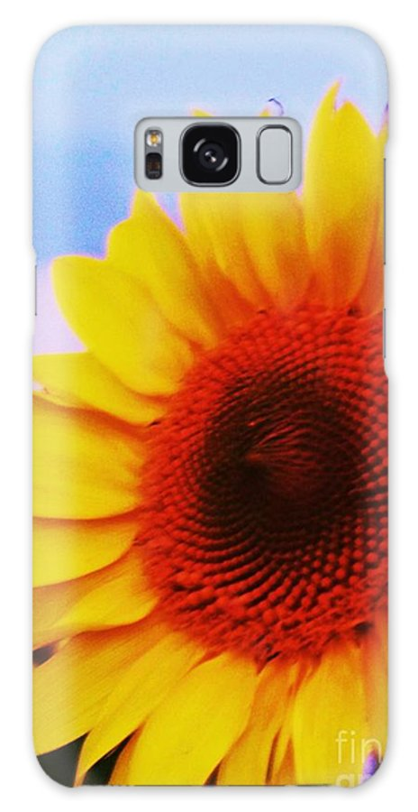 Sunflower Galaxy S8 Case featuring the photograph Sunflower At Beach by Eric Schiabor