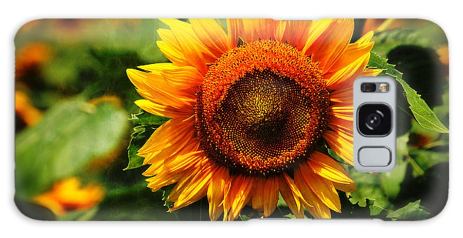 Sun Galaxy S8 Case featuring the photograph Sunflower At Buttonwood Farm by Mike Martin