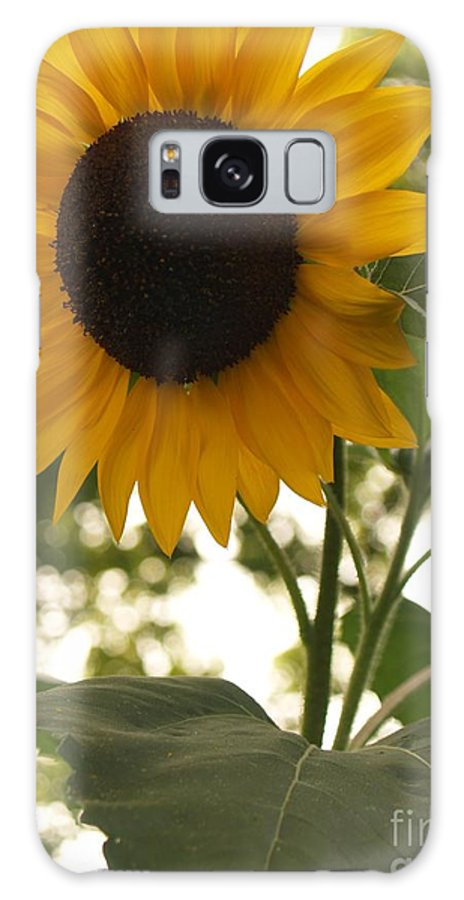 Sunflower Galaxy S8 Case featuring the photograph Sunflower Backlighting by Anna Lisa Yoder