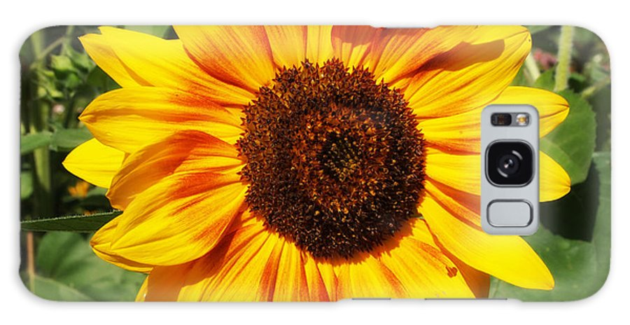 Sunflowers Photographs Galaxy S8 Case featuring the photograph Sunflower Beauty by Deborah Fay