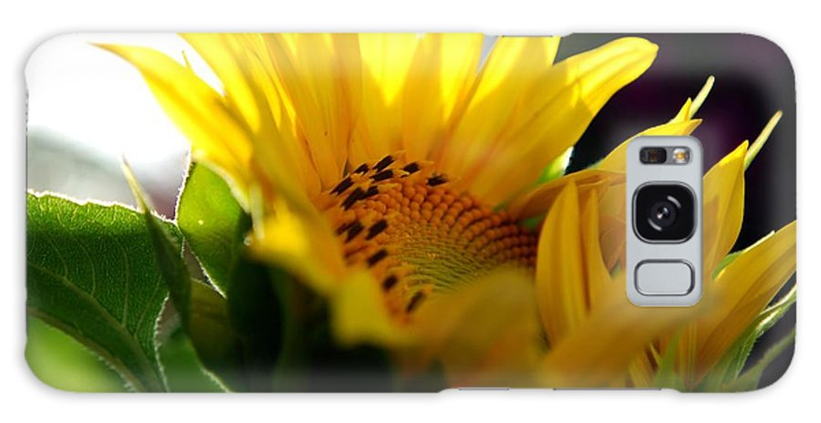Yellow Galaxy S8 Case featuring the photograph Sunflower by Charles Bacon Jr