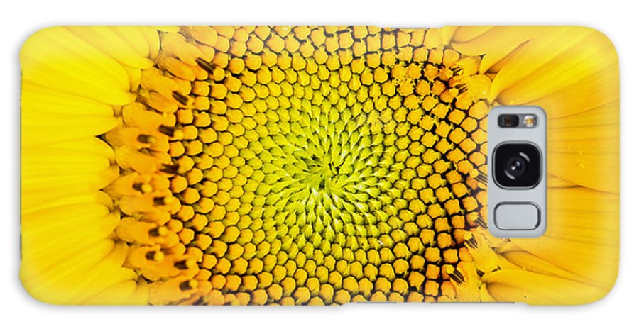 Background Galaxy S8 Case featuring the photograph Sunflower by Edward Fielding