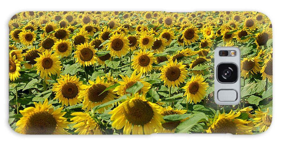 Clear Galaxy S8 Case featuring the photograph Sunflower Field by Mark Dodd
