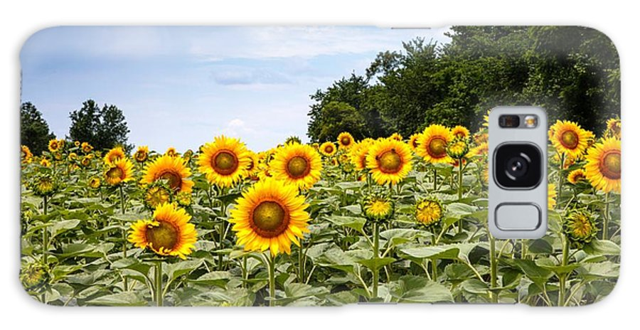 Sunflowers Galaxy S8 Case featuring the photograph Sunflower Field Maryland by Carol VanDyke