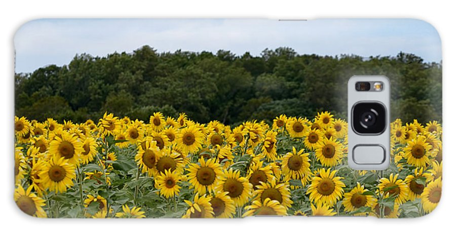 Yellow Sunflower Field Blue Sky Trees Green Sun Flower Galaxy S8 Case featuring the photograph Sunflower Field by Patton Imagery