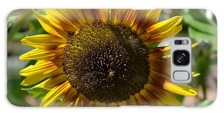 Sunflower Glory Galaxy S8 Case featuring the photograph Sunflower Glory by Luther Fine Art