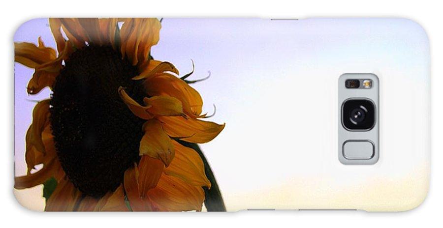 Sunflower Flower Sun Yellow Purples Galaxy S8 Case featuring the photograph Sunflower by John Murphy