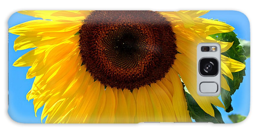 Sunflower Galaxy S8 Case featuring the photograph Sunflower by Kathy Salit