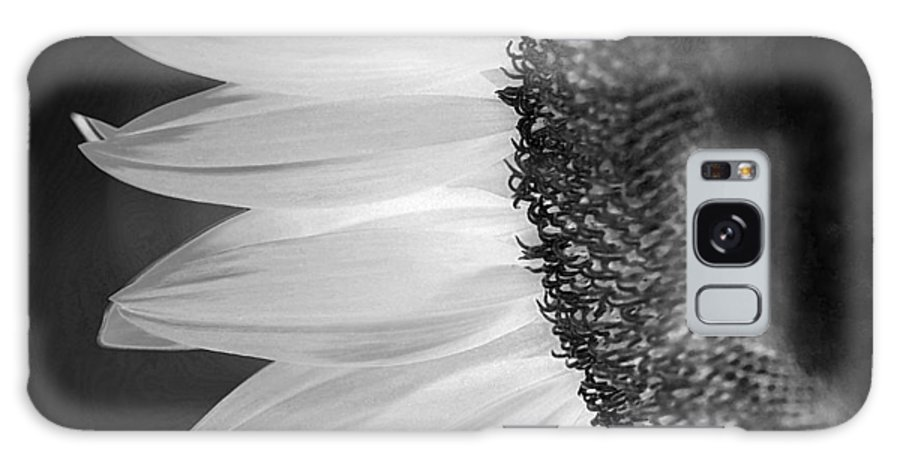 Sunflower Galaxy S8 Case featuring the photograph Sunflowers Beauty Black And White by Sandi OReilly