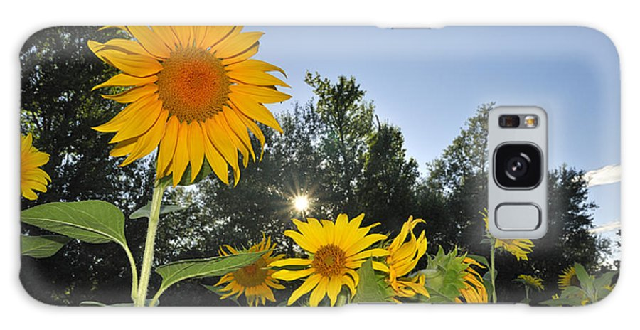 Sunflower Galaxy S8 Case featuring the photograph Sunflowers by Guido Montanes Castillo