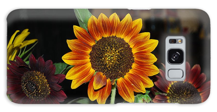 Squirrel Food Galaxy S8 Case featuring the photograph Sunflowers by Robert Floyd