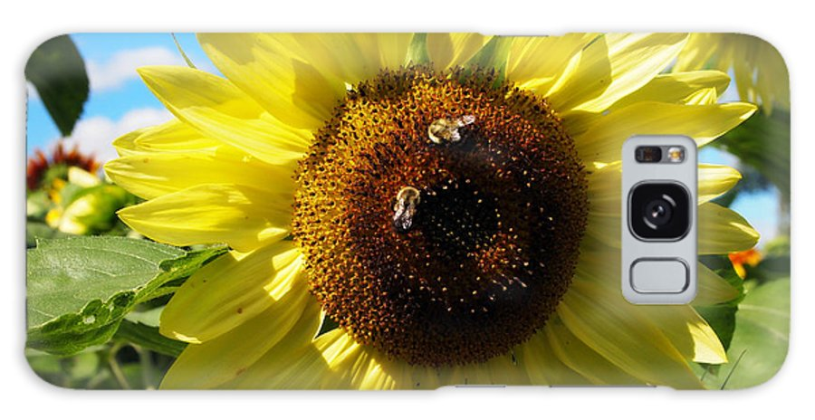 Sunflowers Photographs Galaxy S8 Case featuring the photograph Sunflowers With Bees Harvesting Pollen by Deborah Fay