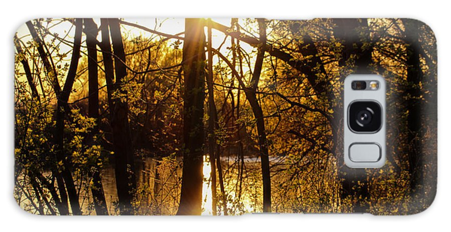 Yellow Galaxy S8 Case featuring the photograph Sunlit Trees by Laurel Butkins
