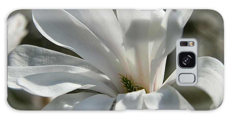 Magnolia Galaxy S8 Case featuring the photograph Sunlit White Magnolia by Christiane Schulze Art And Photography