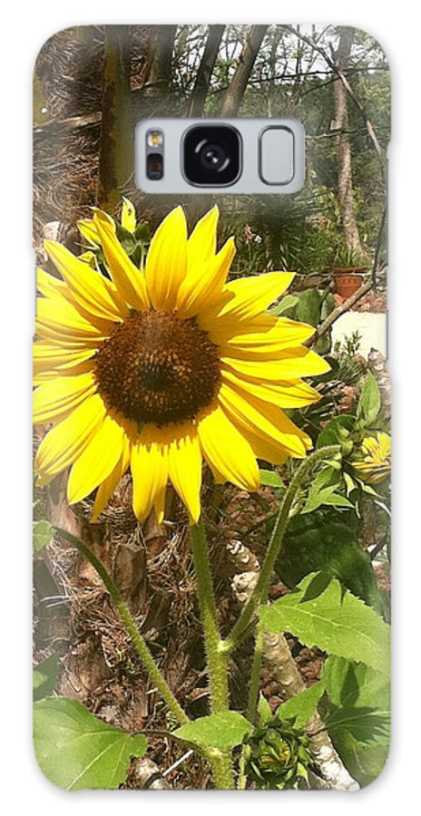 Flower Galaxy S8 Case featuring the photograph Sunny Day by William Hallett