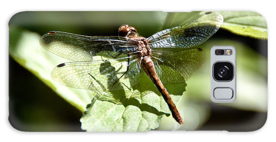 Dragonfly Galaxy S8 Case featuring the photograph Sunny Dragonfly by Cheryl Baxter