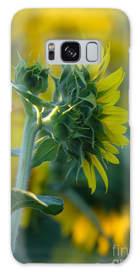 Sunflower Galaxy S8 Case featuring the photograph Sunny by Rima Biswas