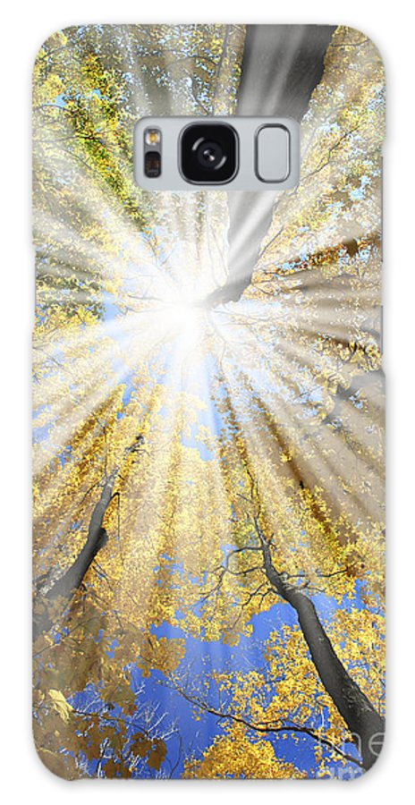 Autumn Galaxy S8 Case featuring the photograph Sunrays In The Forest by Elena Elisseeva