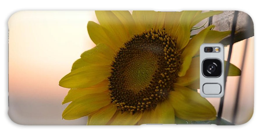 Sunrise Sunflower Galaxy S8 Case featuring the photograph Sunrise Sunflower by Maria Urso