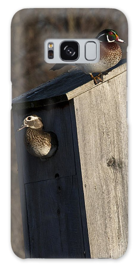 Wood Galaxy S8 Case featuring the photograph Sunrise Woodies by Roger Bailey